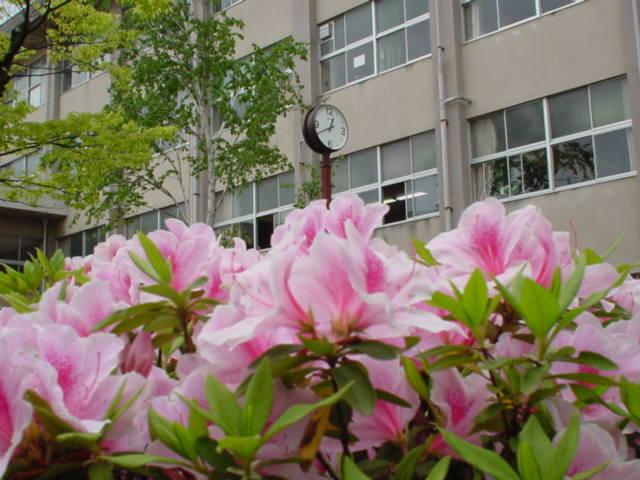 校内は花盛りになります。